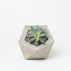 Geodesic Concrete Planter