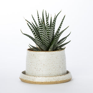 Stak Ceramics Planter + Tray - KESTREL