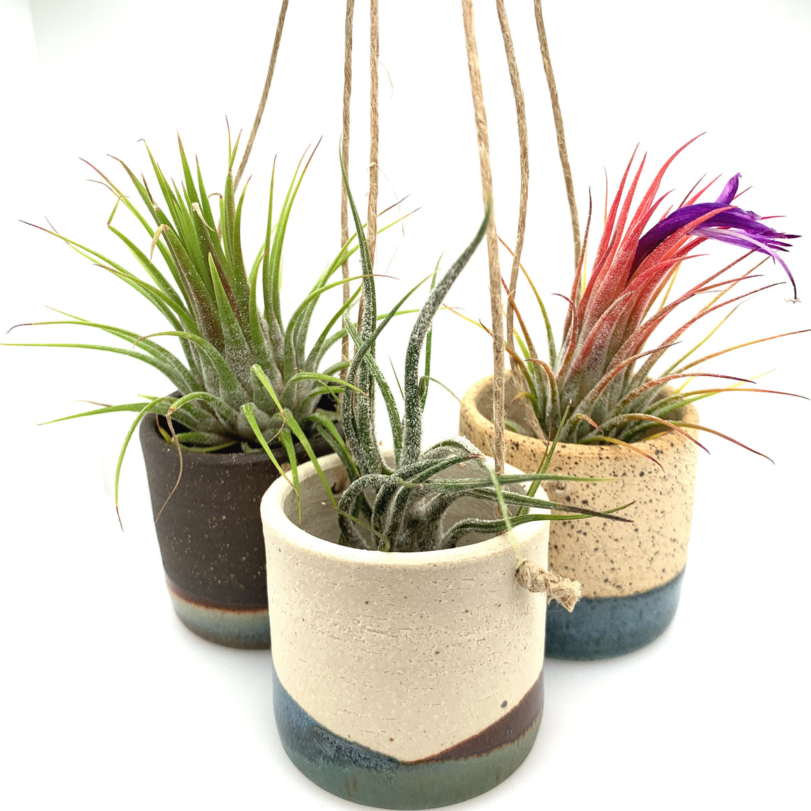 Tiny Hanging Horizon Airplant Pot
