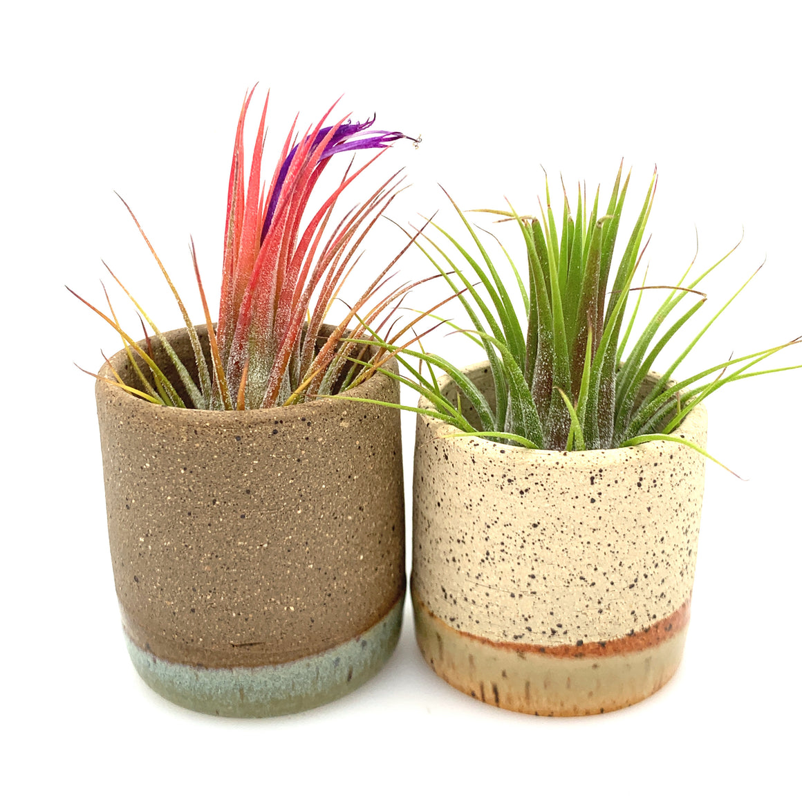 Tiny Horizon Airplant Pot