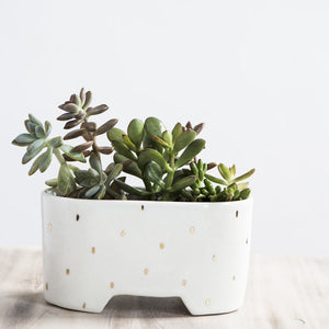 Shortie Planter - Gold Raindrop