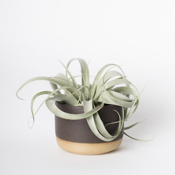 handmade planter matte black ceramic tillandsia airplant
