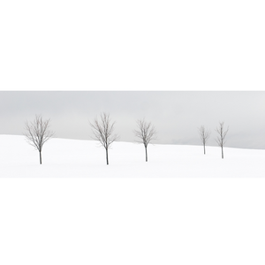 "Five Trees - 8""x10"" Print - KESTREL"