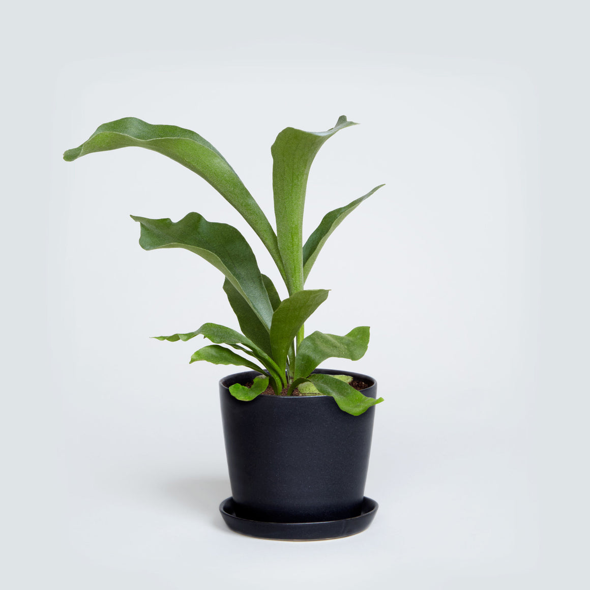 August Planter (Black) - KESTREL