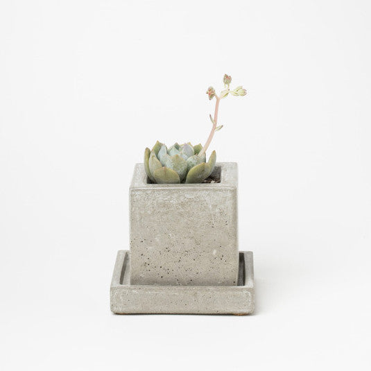 Mini Square Concrete Planter - KESTREL