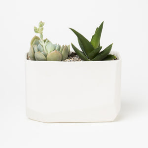 White Crystal Planter
