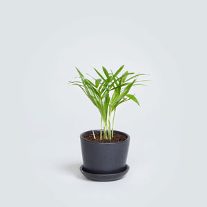 Ezra Mini Planter (Matte Black) - KESTREL