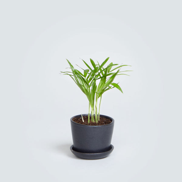 Mini Stoneware Planter in Matte Black