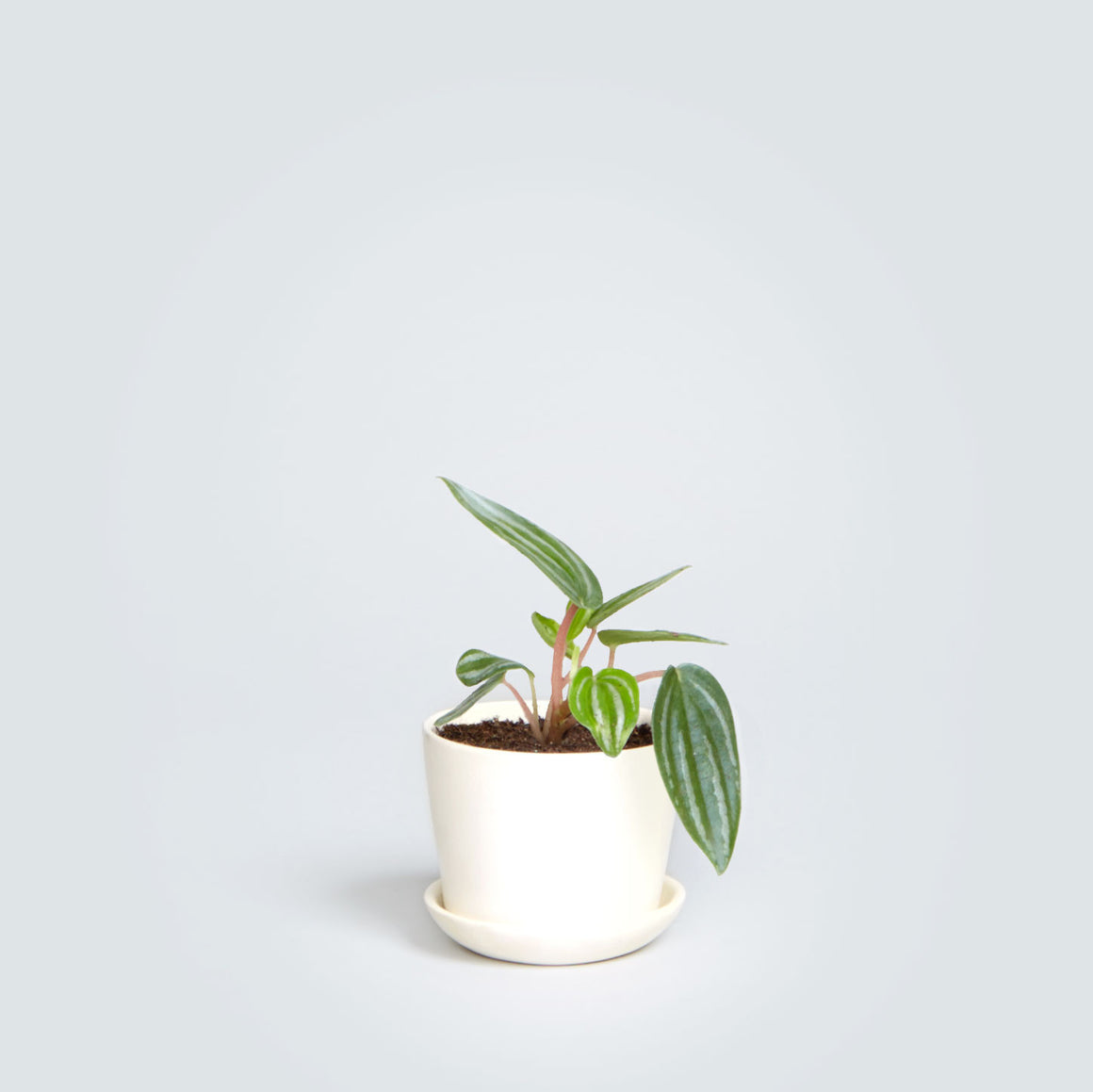 Mini Stoneware Planter in White