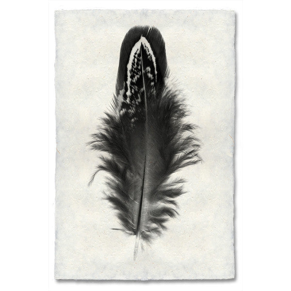 Mallard Duck Feather Print #3 - KESTREL