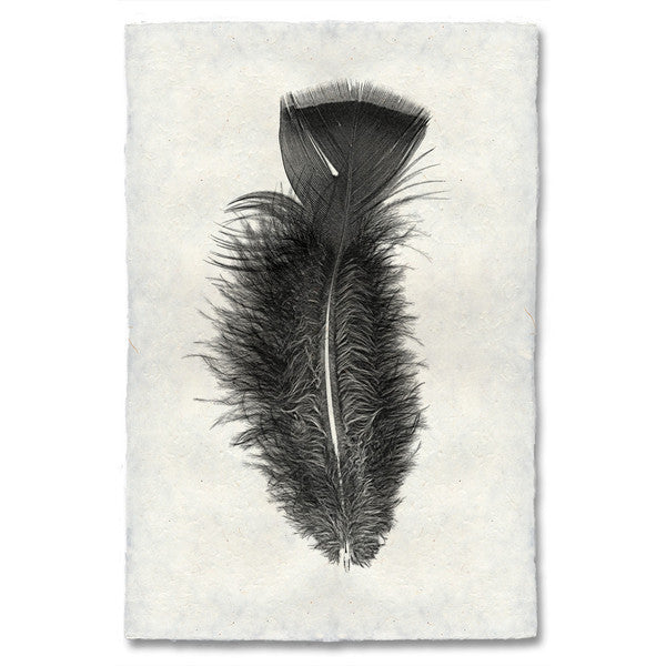 Turkey Feather Print #10 - KESTREL