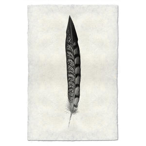 Lady Amherst Pheasant Feather Print #11 - KESTREL