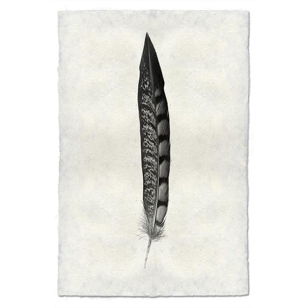Lady Amherst Pheasant Feather Print #11