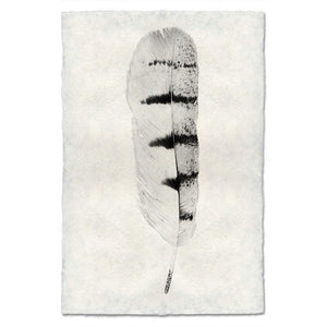 Hawk Feather Print #8 - KESTREL