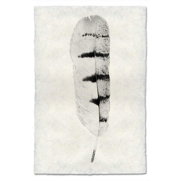 Hawk Feather Print #8