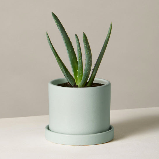 Small Hyde Pot (Mint) - KESTREL