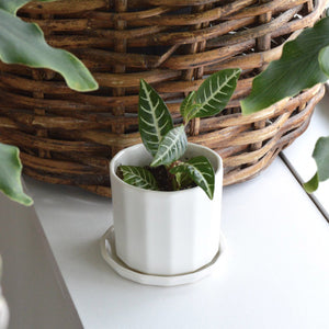 Mini Riveted Planter - KESTREL