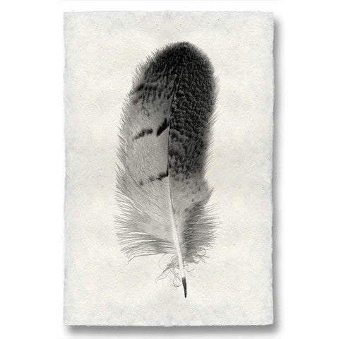 Owl Feather Print #7 - KESTREL