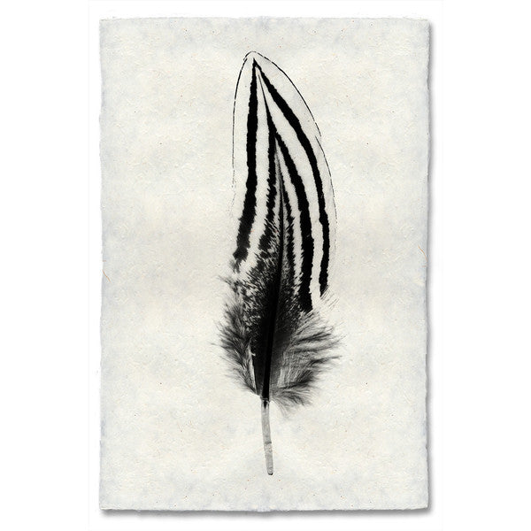 Silver Pheasant Feather Print #2 - KESTREL