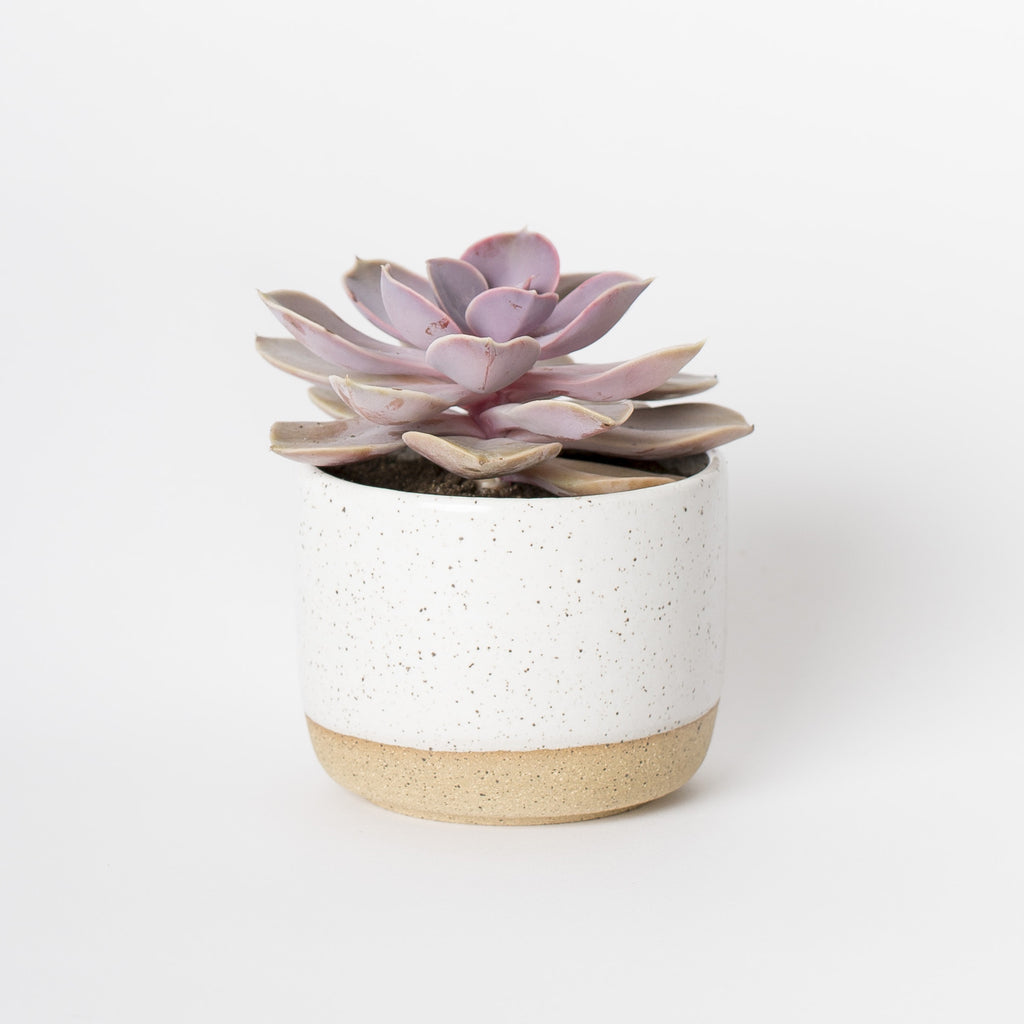 handmade planter white speckle succulents