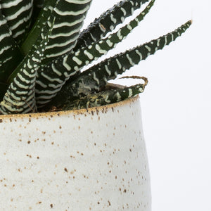 Stak Ceramics Planter + Tray