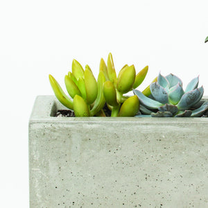 Concrete Windowsill Planter - KESTREL