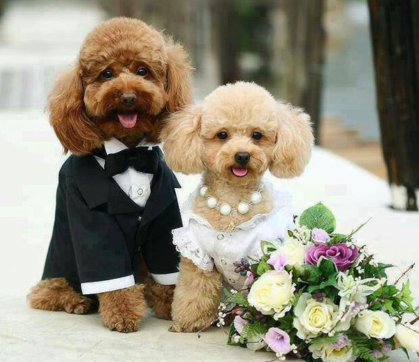 Wedding Gifts For Dog Lovers: Poodle Wedding: The Bride And Groom