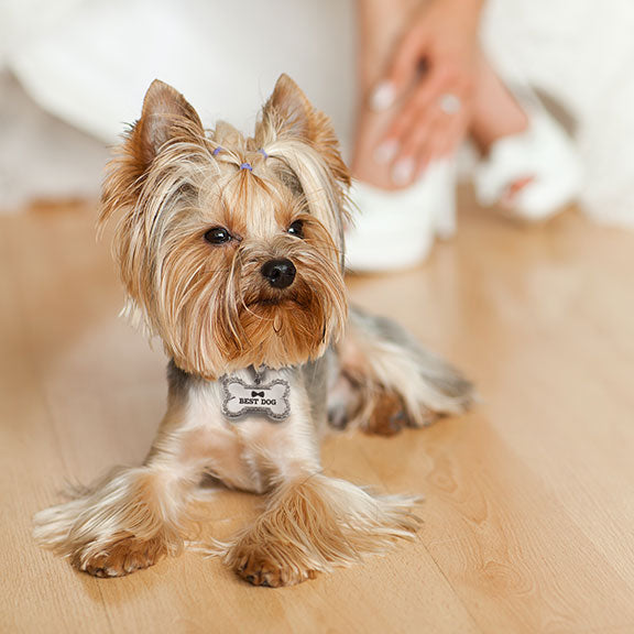 Best Dog Wedding Dog Collar