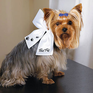 "Super cute dog wearing the ""Best Pet"" Wedding Bow. She is ready for the big day!"