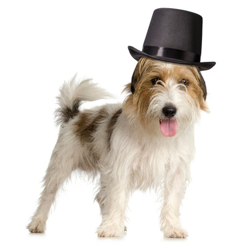 Black Top Hat for Dogs