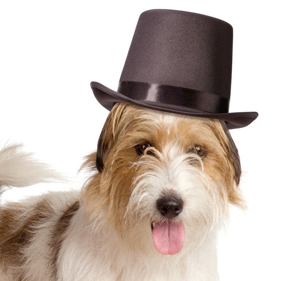Black Top Hat for Dogs for Wedding Ceremonies