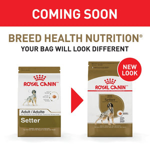 Royal Canin Breed Health Nutrition Adult Setter Dry Dog Food
