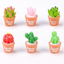 Load image into Gallery viewer, Charming And Captivating Miniature Succulents Cactus Plants For Home Decor (2 Pcs)