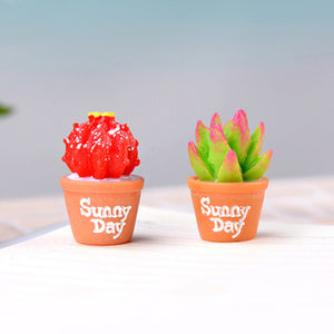 Charming And Captivating Miniature Succulents Cactus Plants For Home Decor (2 Pcs)