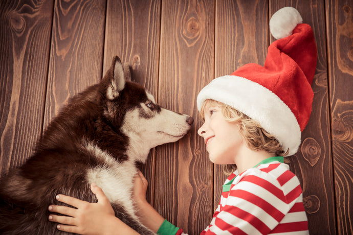 Protecting your Pets from Holiday Hazards