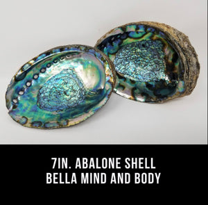 7in. Abalone Shell