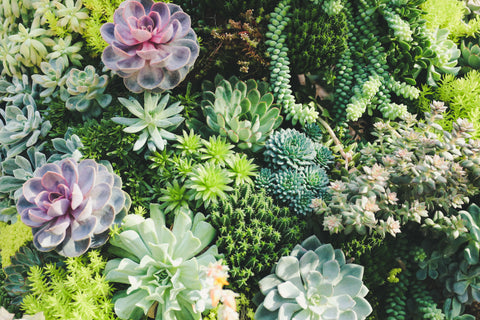 Decorative stones against succulents