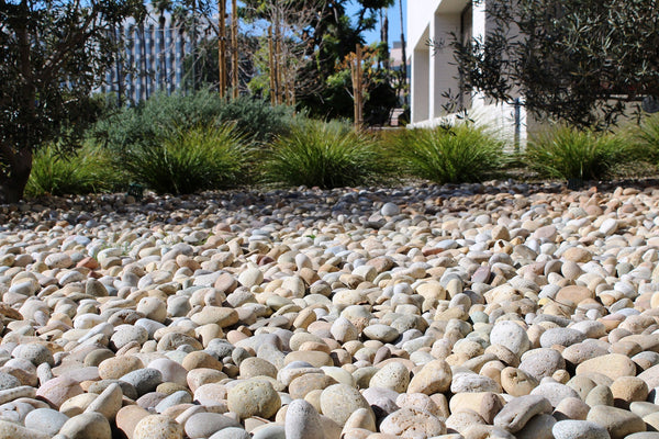 Buff Mexican Beach Landscape Pebbles