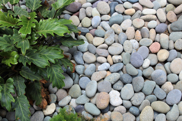 Mixed mexican beach pebble in unique landscape designs