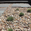 Salmon Bay Stones in a landscape