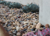 Sonora Shine Decorative Stones in ground cover