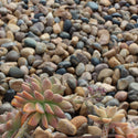 Sonora Shine Pebble Decorative Landscape River Rock