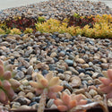 Sonora Shine rocks as ground cover with succulents