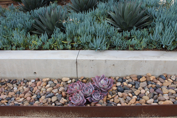Sonora Shine pebble as ground cover