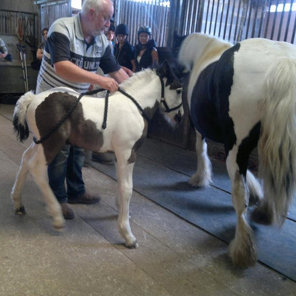 Foal Handling and Stud Practice - 12th - 13th June 2021