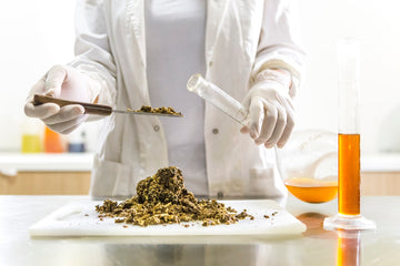 How is CBD Oil Extracted?