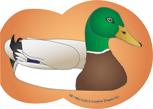 Picture of Large Notepad - Mallard Duck