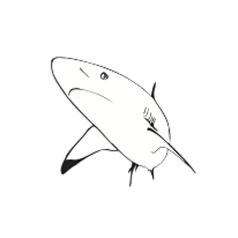 Picture of Incentive Stamp - Shark