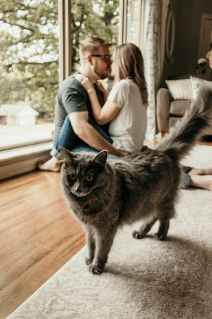 Couple kissing in the background and their cat in the foreground.