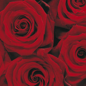 Komar Roses Fotobehang 194x270cm | Yourdecoration.be